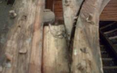 oak dowel to plug old screw holes of gunnels and frames